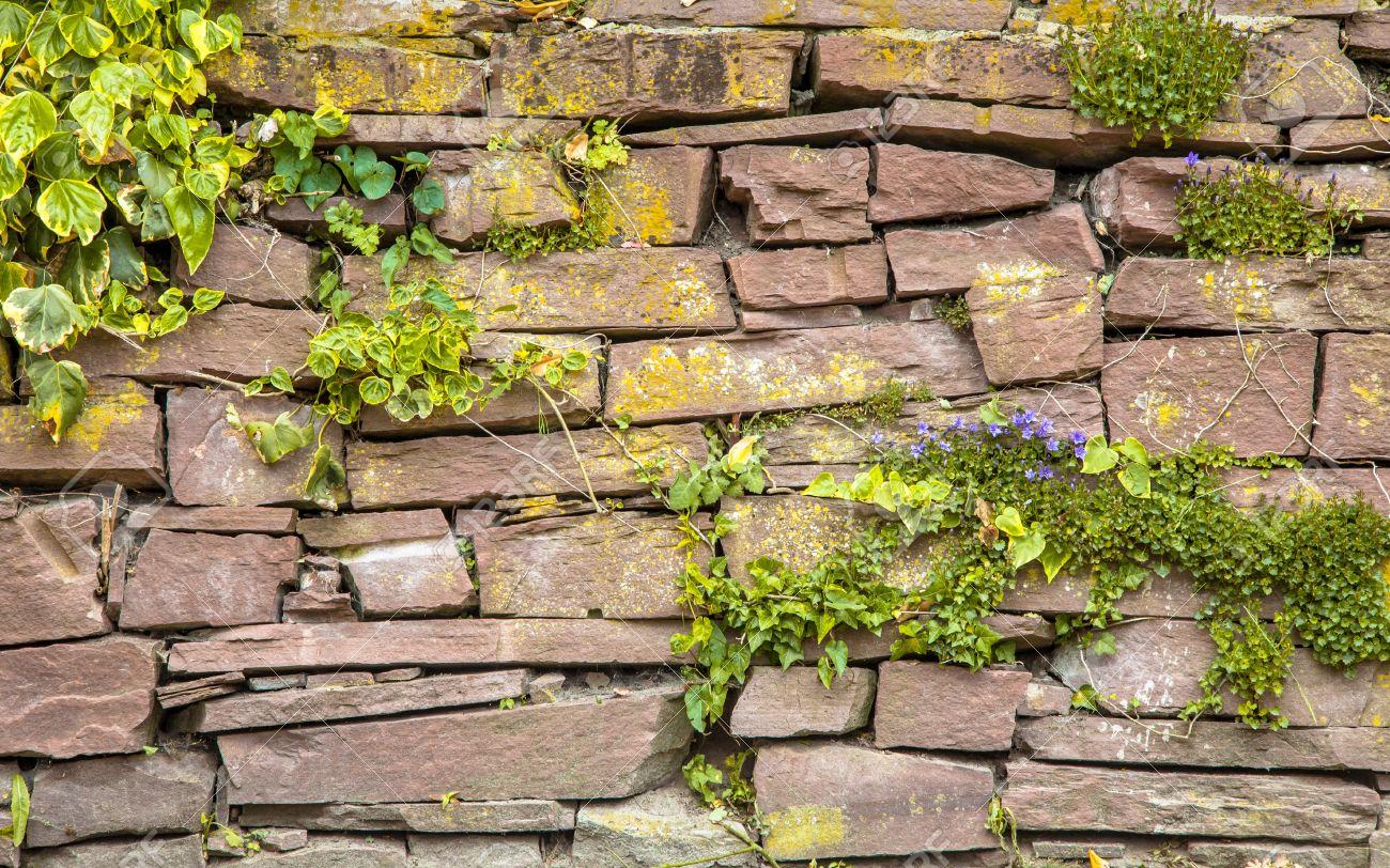 Plante Sur Les Murs végétation mur en pierre de fond avec les plantes et les fleurs