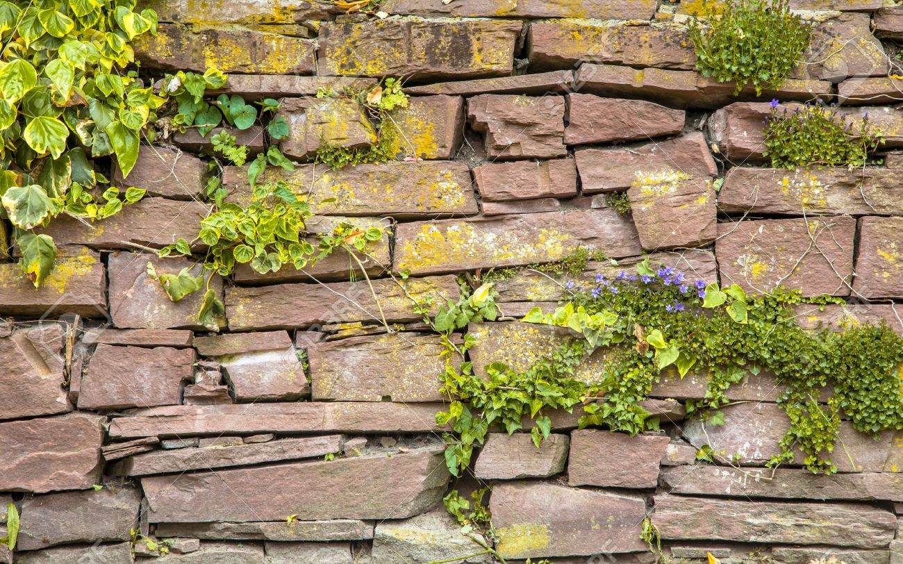 Wall vegetation Stone Background with Plants and Flowers - 52098628