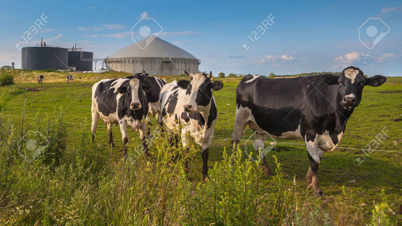 Bio Gas Installation on a farm processing Cow Dung as a side business activity - 62229478