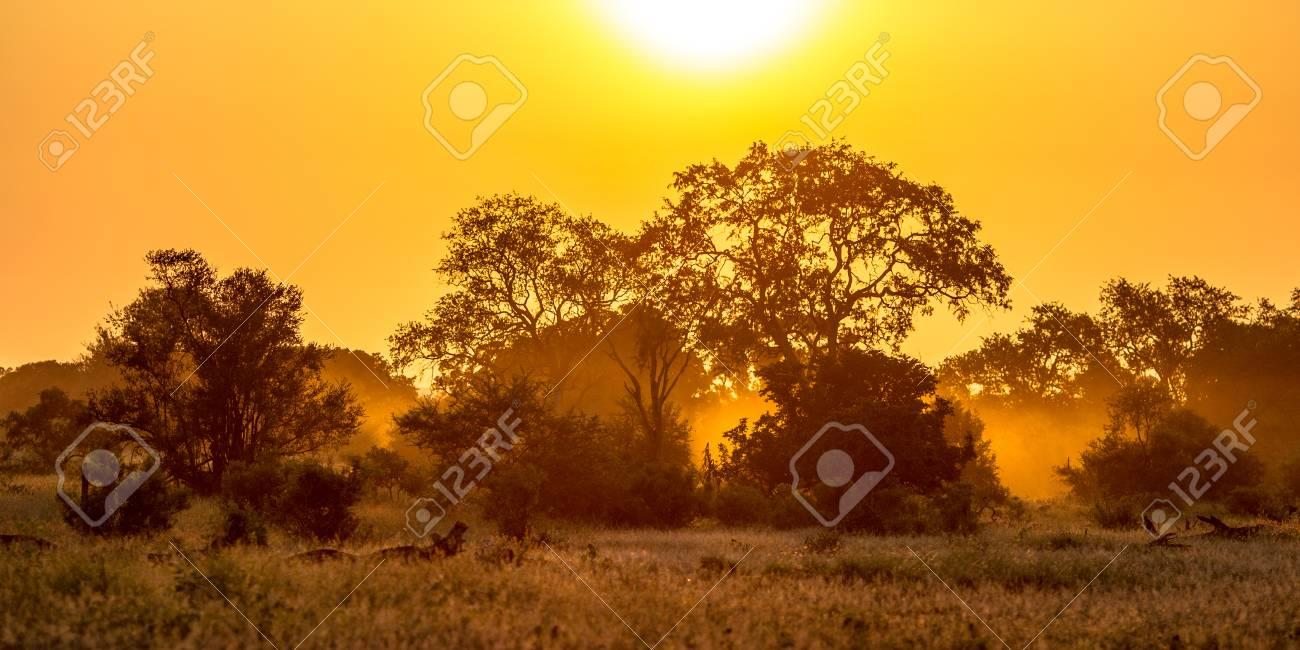 Orange morning light over savanna tree and bush in Kruger national park South Africa - 114511614