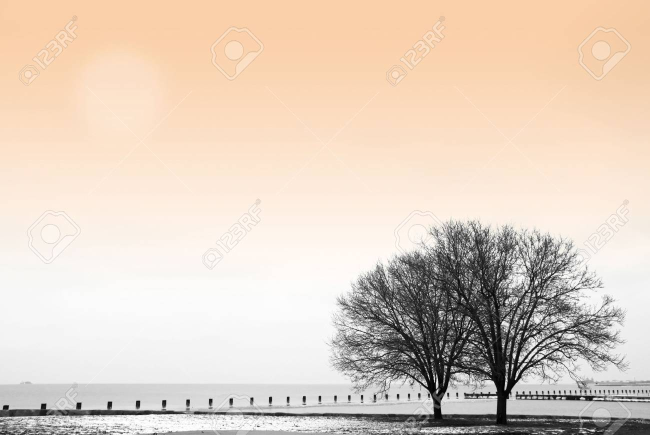 Winter scene with trees by the lake Stock Photo - 747217