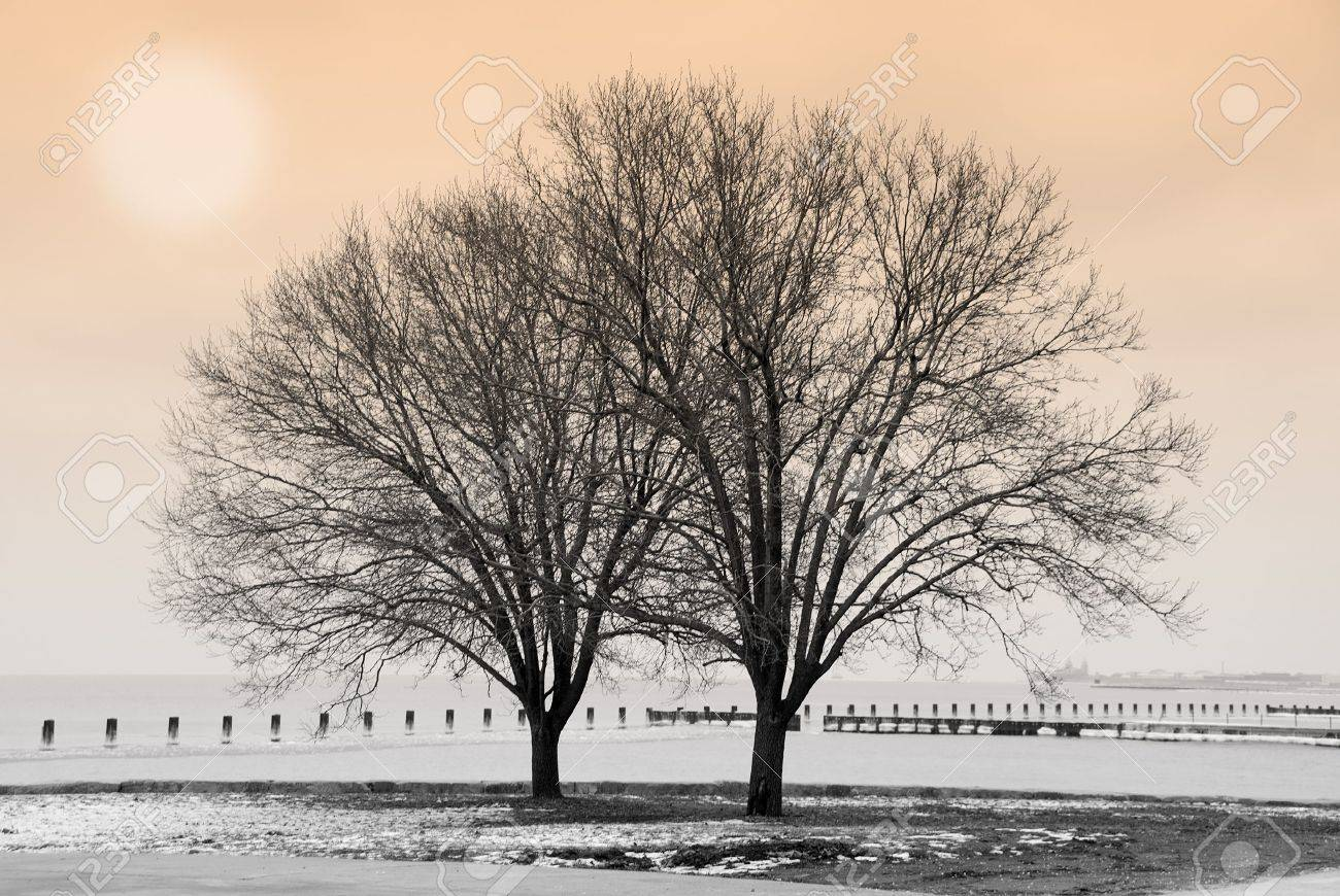 Winter scene with trees by the lake Stock Photo - 764256