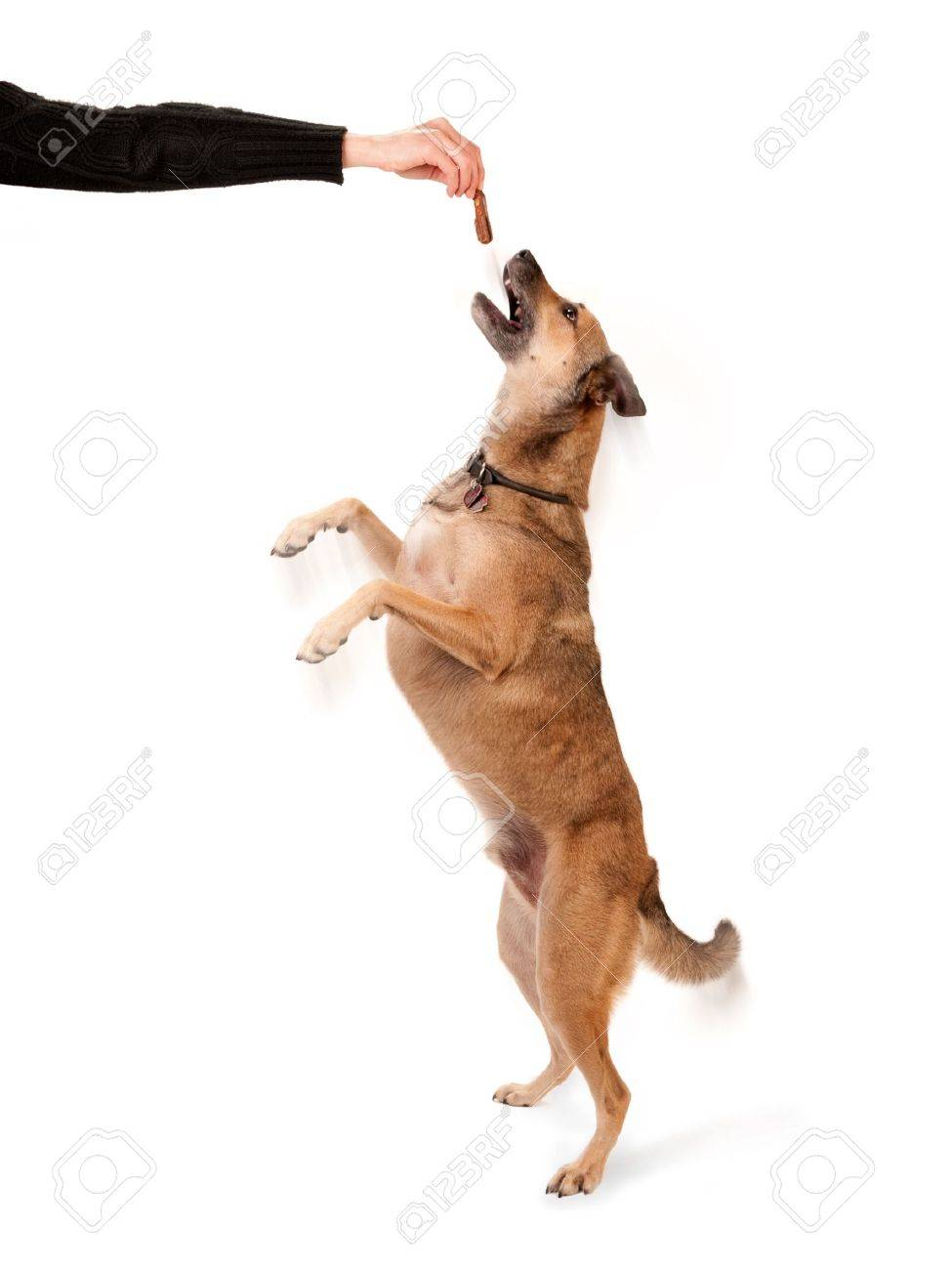 Canine trainer holding a pet treat for jumping dog Stock Photo - 5772714