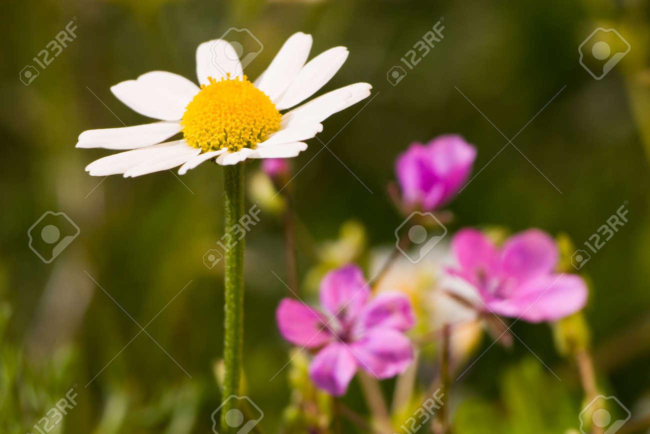 Yellow Flower With White Petals On Three Blue Flowers Bakcground
