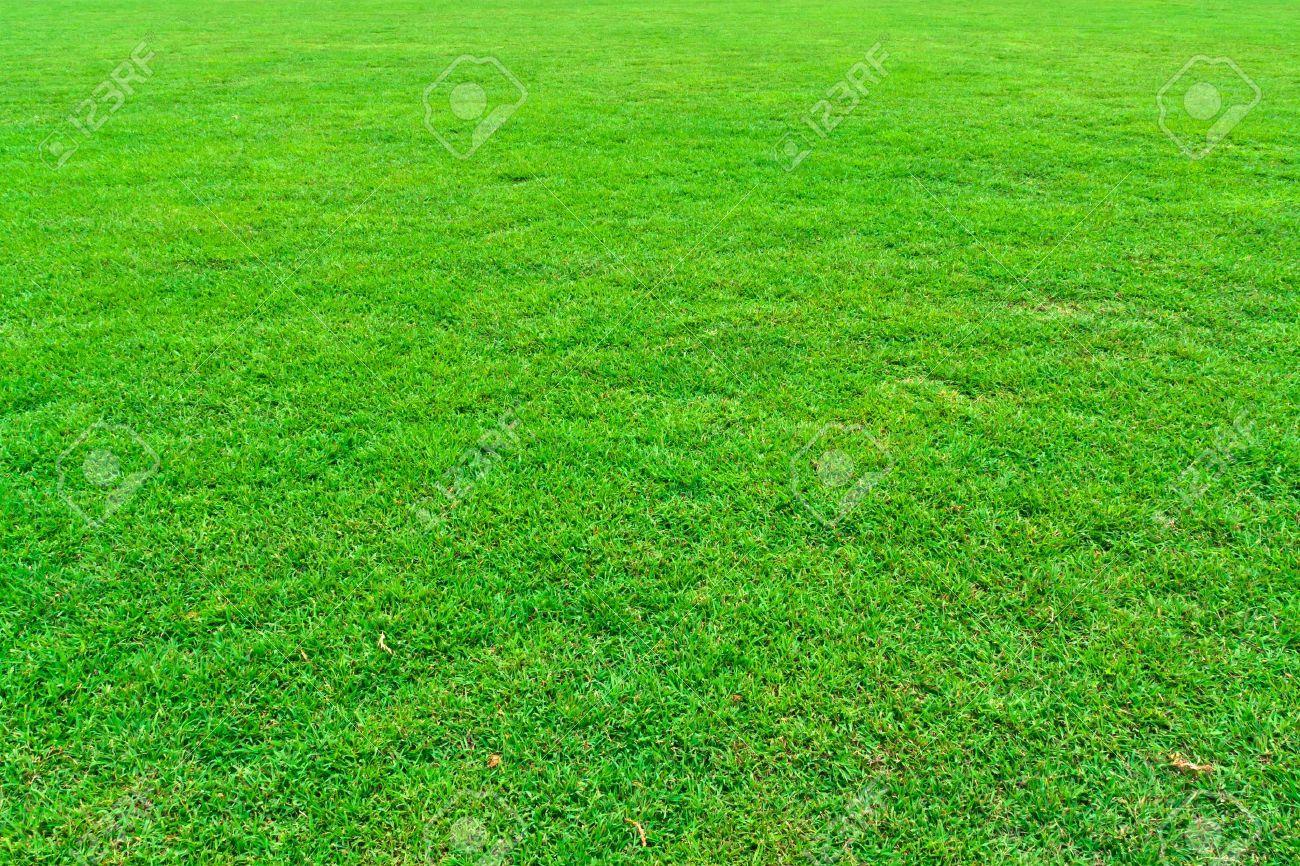 Fresh green grass field background texture - 12353143