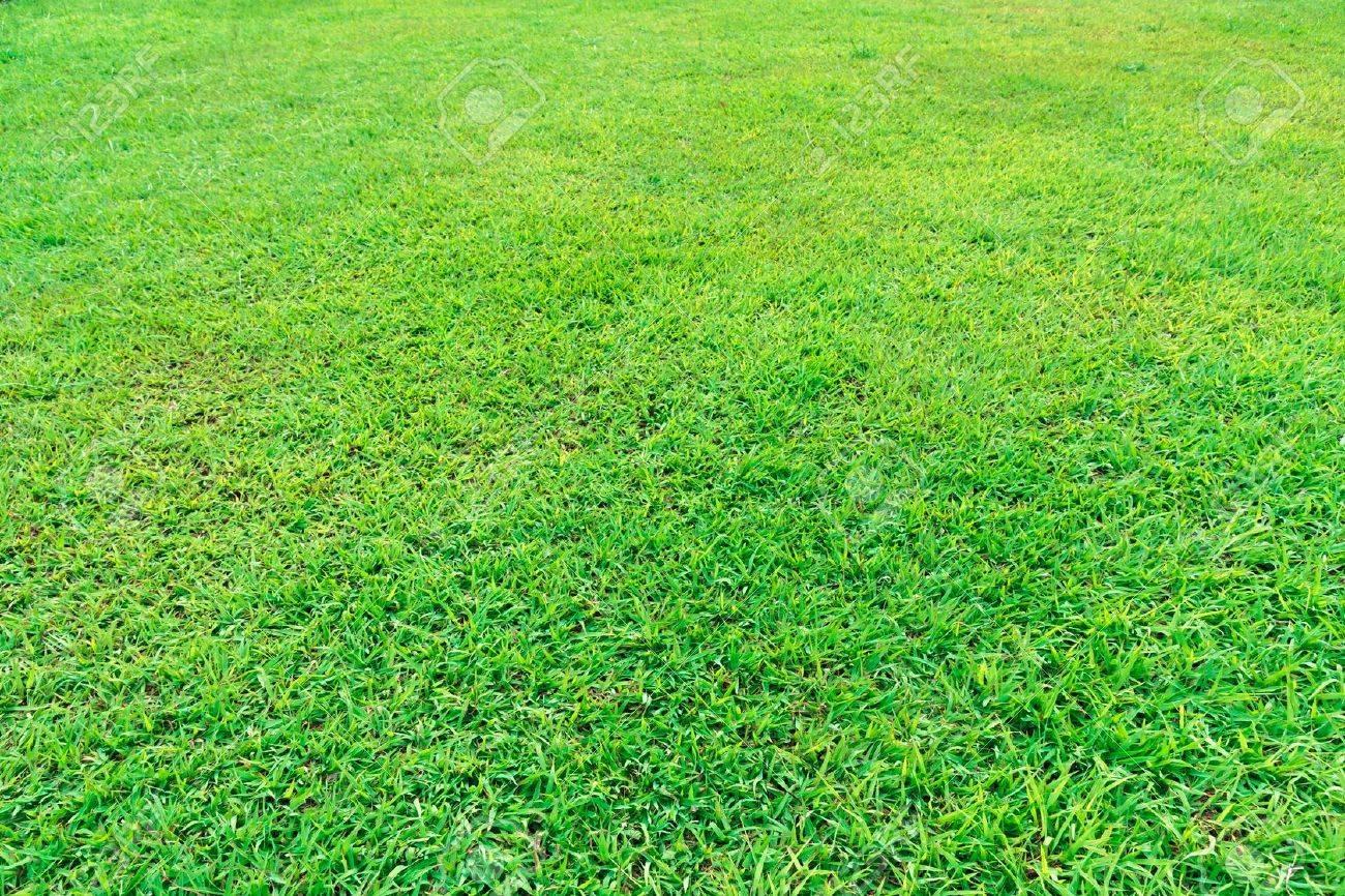Fresh green grass field background texture - 12353592