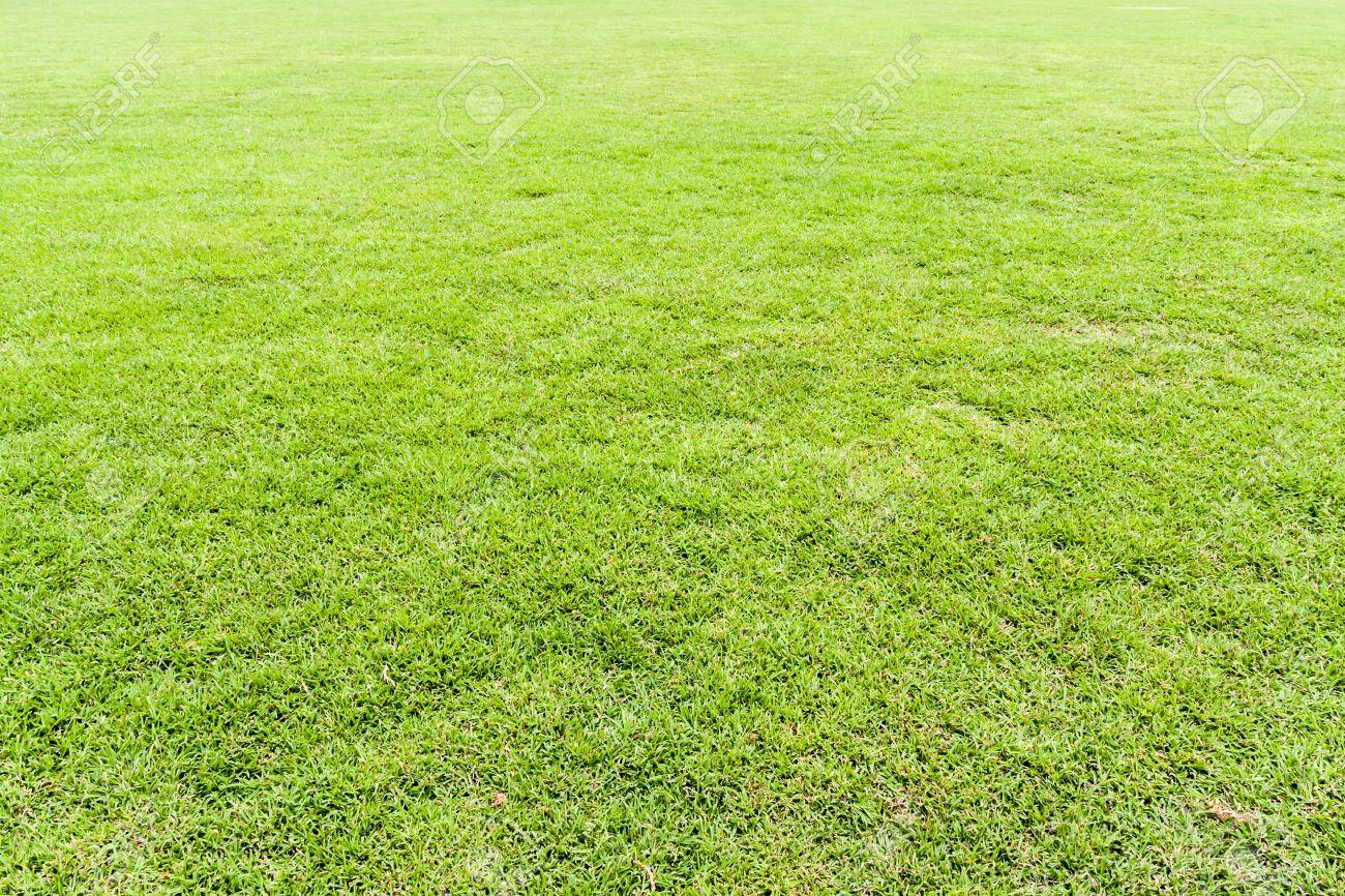 grass field texture. Seamless Green Grass Field Perspective Background Texture Stock Photo - 21882511 E