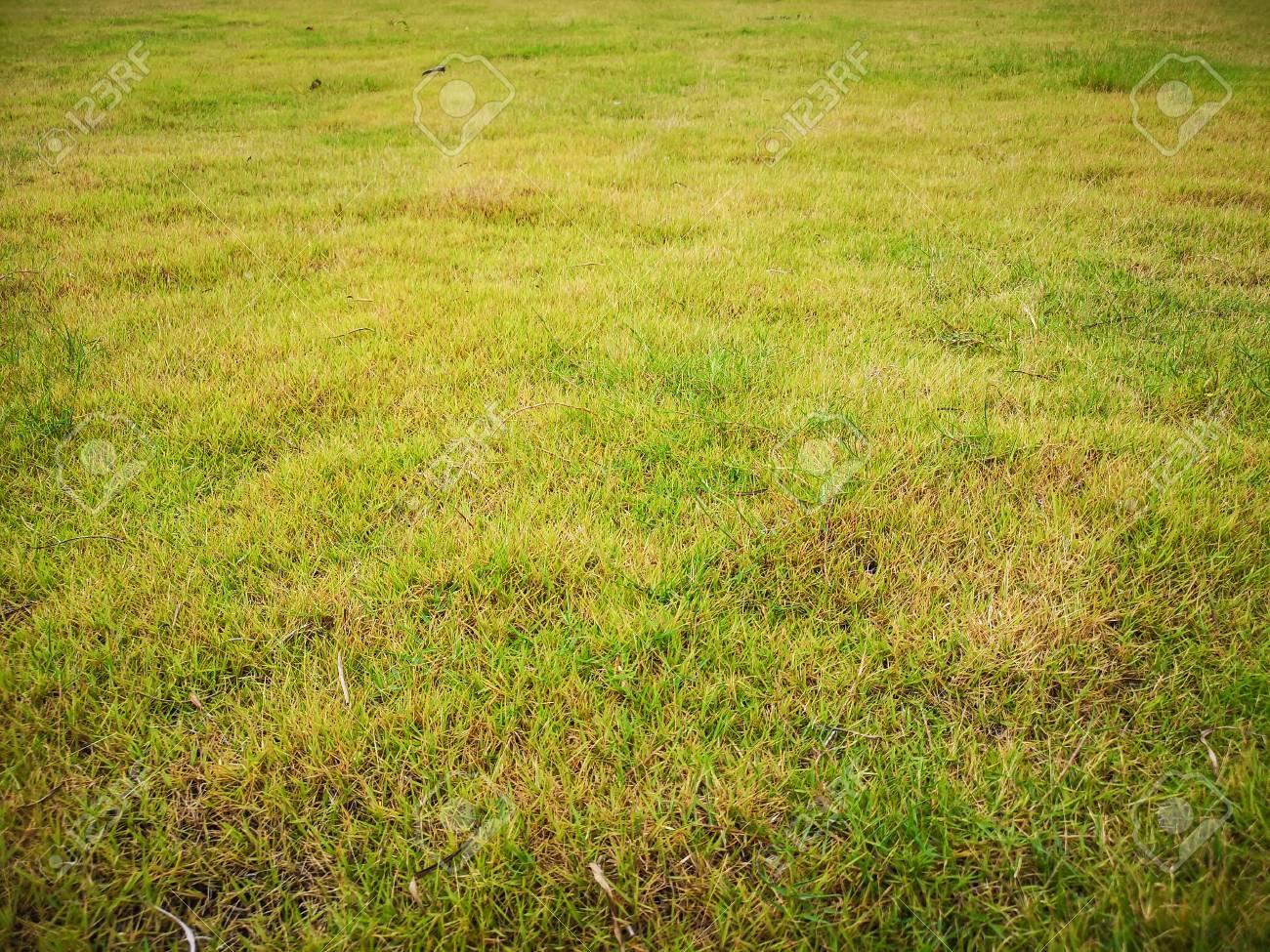 Empty fresh green grass field bakground - 105930563