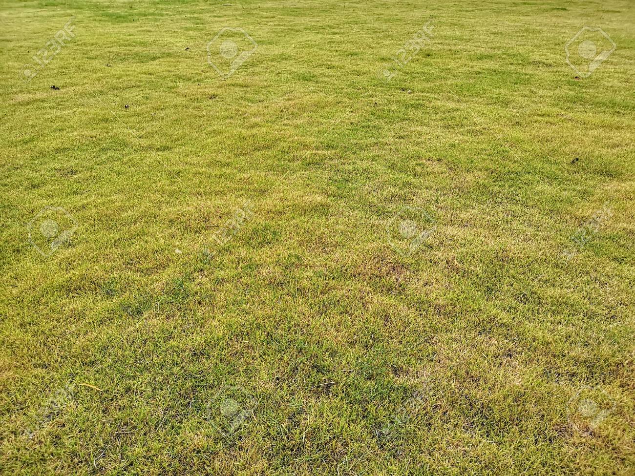 Empty fresh green grass field bakground - 105929046