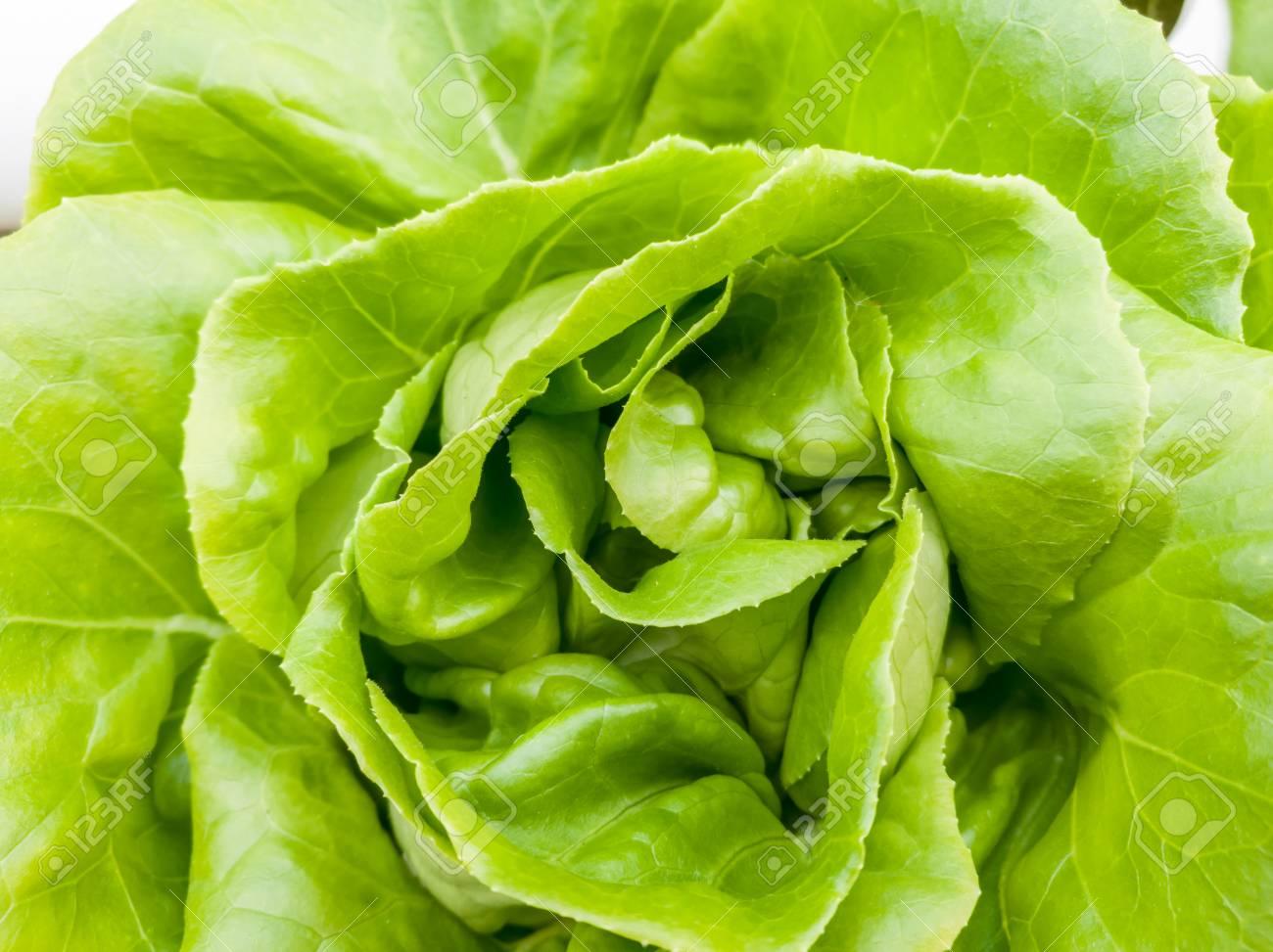 Salad vegetable green fresh lettuce in farm close up - 106236406