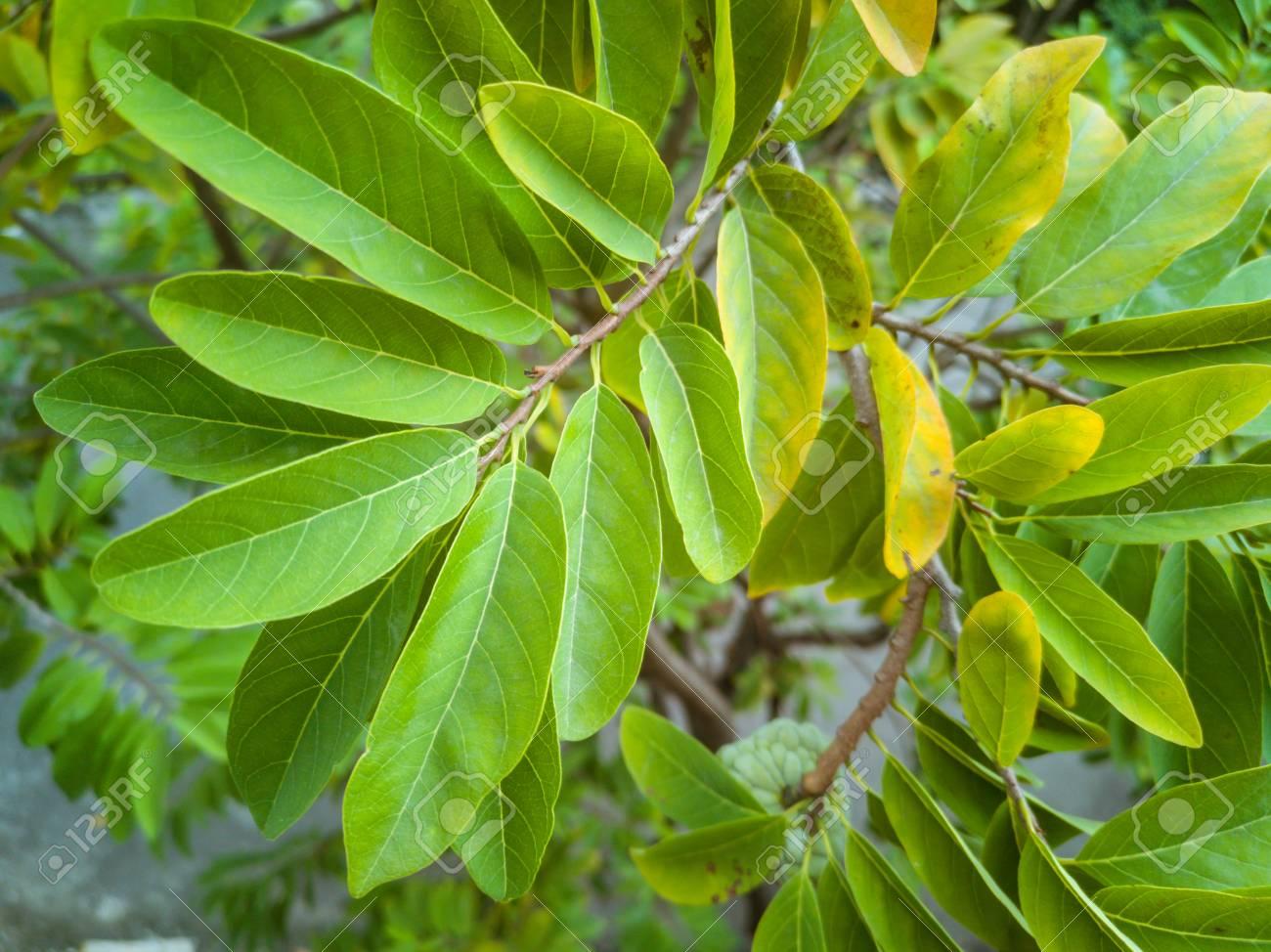 Green fresh natural leaves background in garden - 106223066
