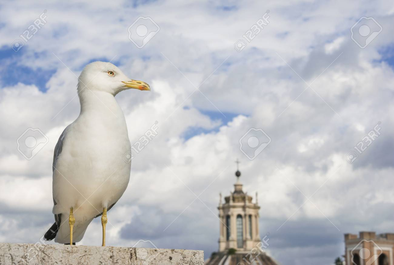 Seagull watch sky and clouds above Rome city center Banque d'images - 85169259
