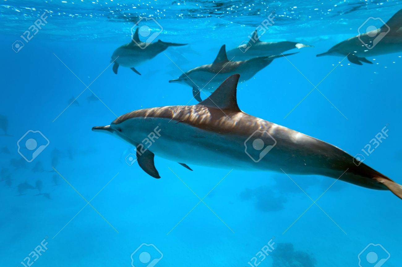 Dolphins in the sea Stock Photo - 6007809