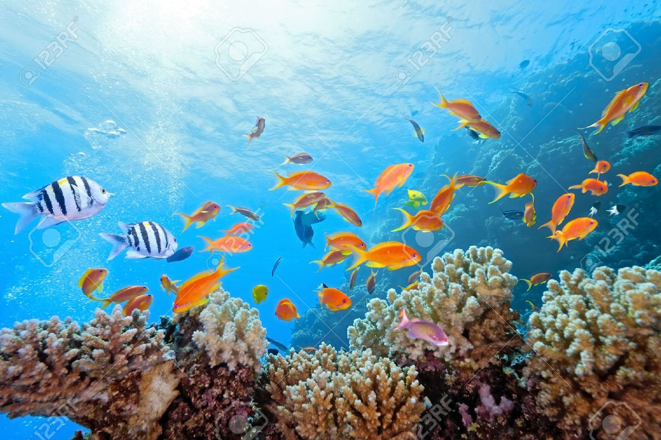 Coral scene on the reef Stock Photo - 6800023
