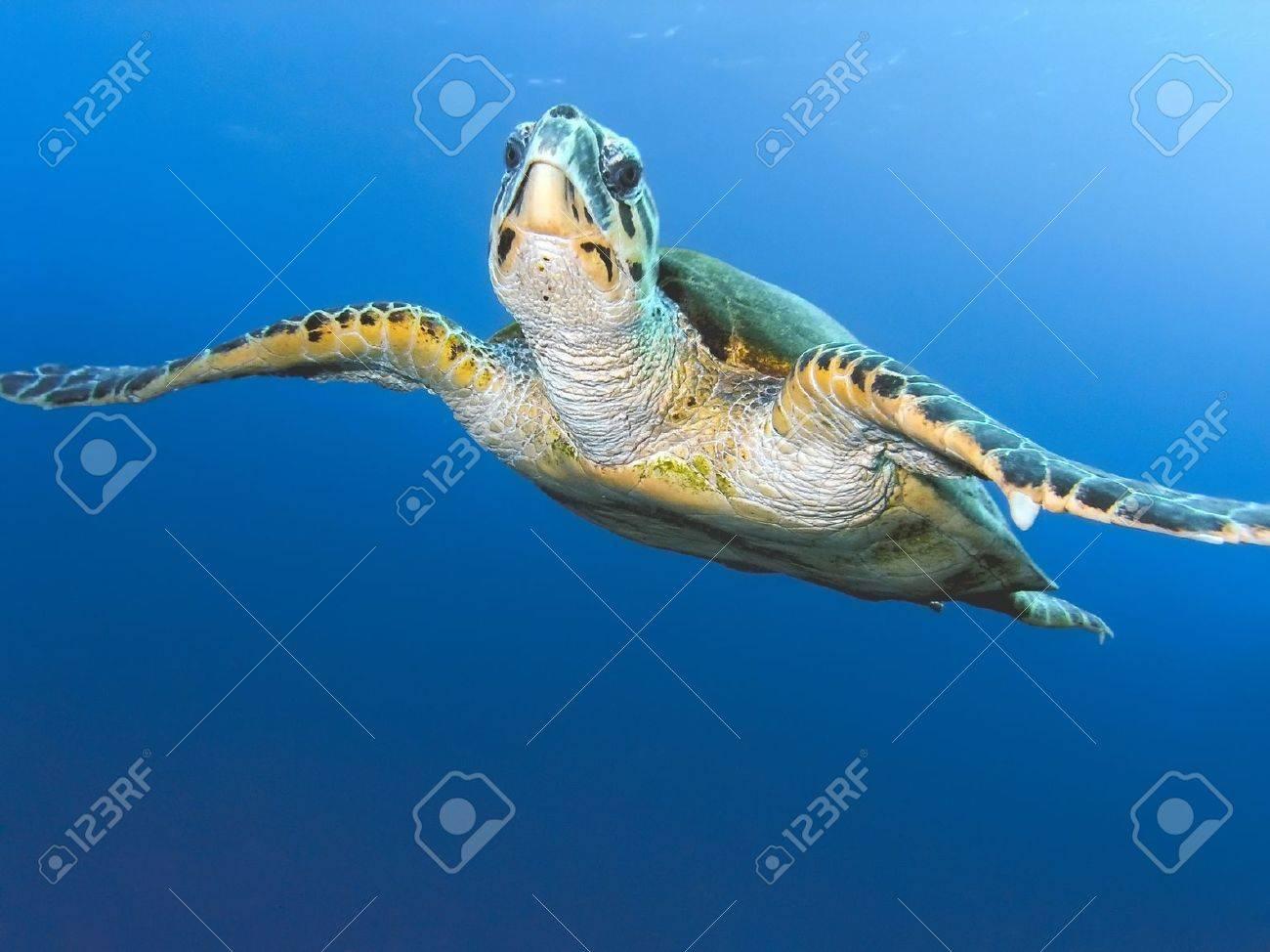 Sea turtle Stock Photo - 9448218