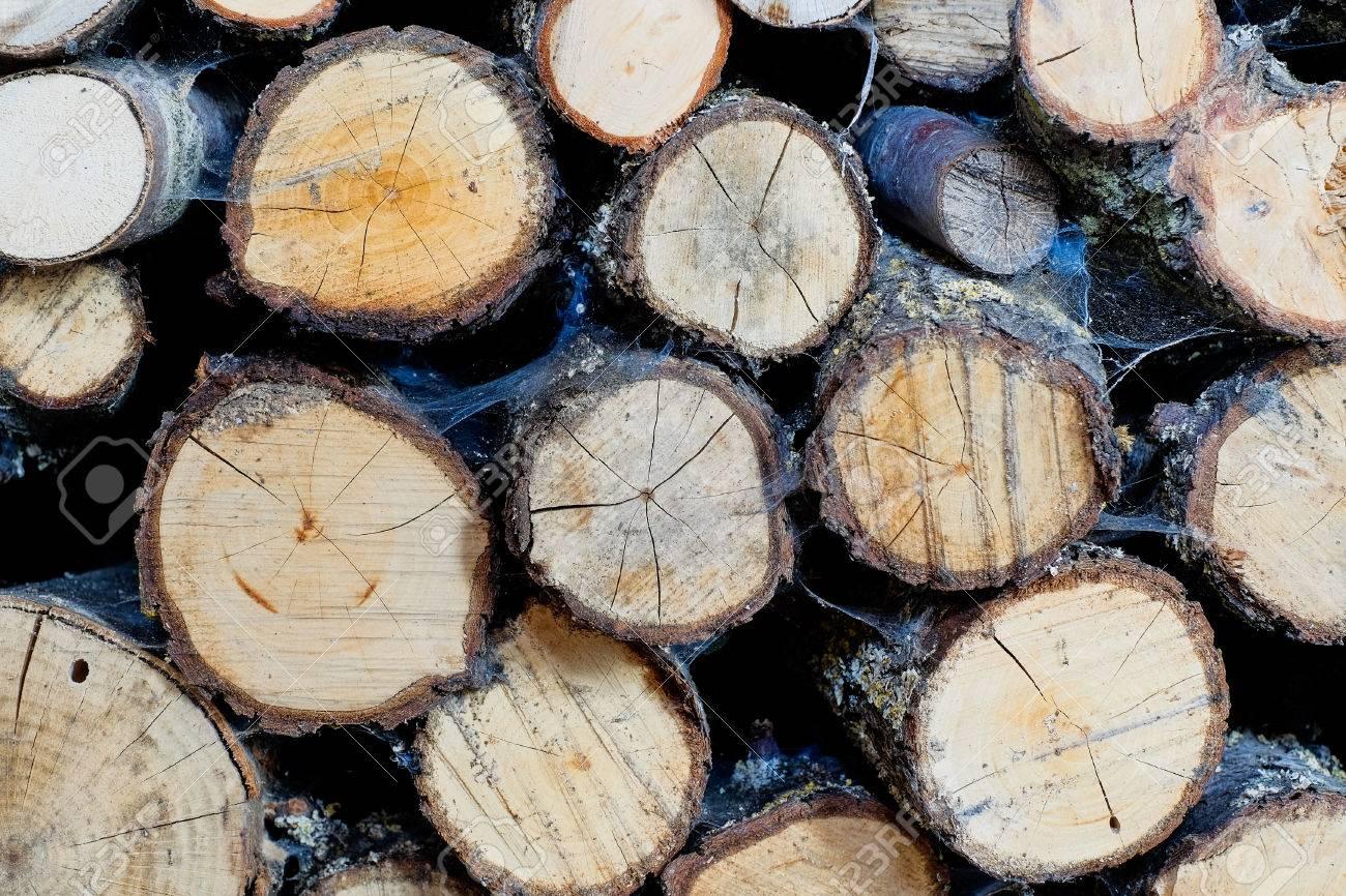 Close up of cut tree trunk Standard-Bild - 43558334
