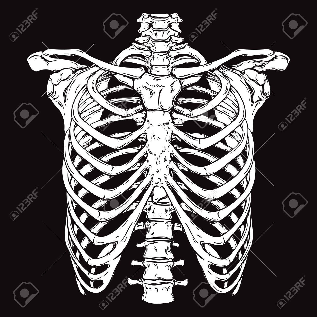 Hand drawn line art anatomically correct human ribcage. White over black background vector illustration. Print design for t-shirt or halloween costume - 61784314