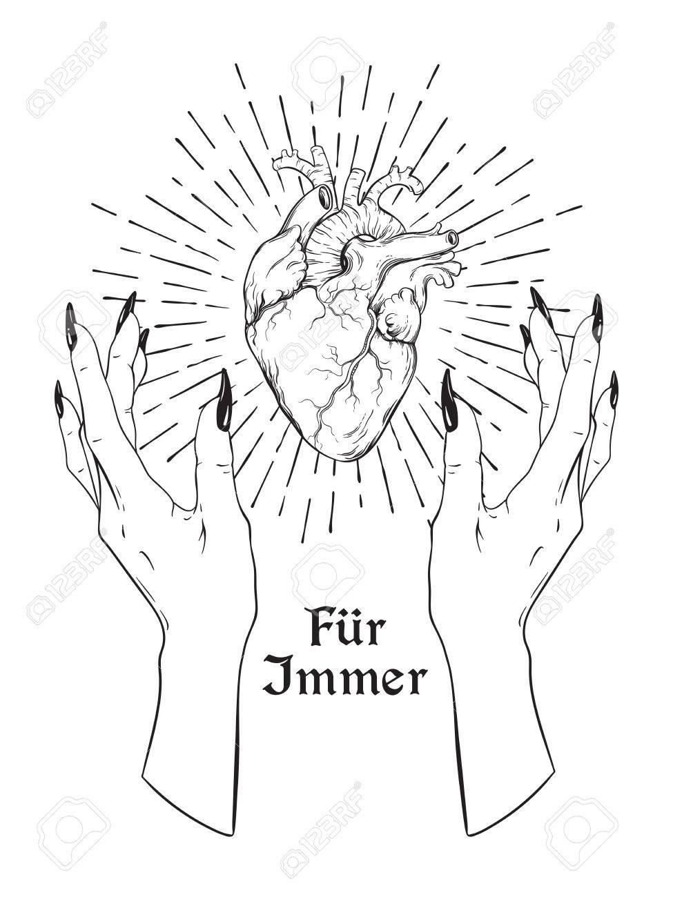 Corazón Humano En Agraciadas Manos Femeninas Aisladas. Etiqueta ...