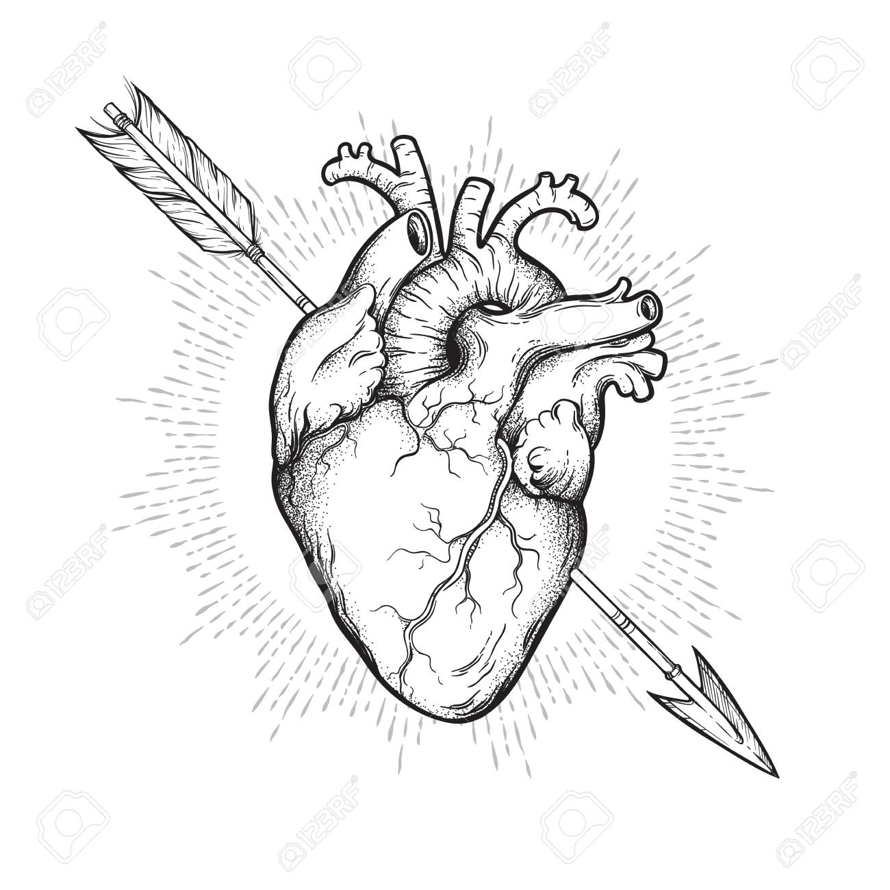 Human Heart Pierced With Cherubs Arrow Hand Drawn Line Art And Royalty Free Cliparts Vectors And Stock Illustration Image 116796960