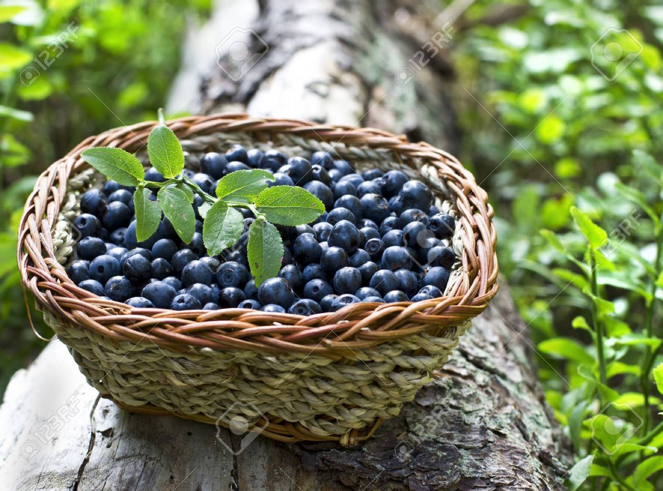 Pictures Of Blueberries In A Basket
