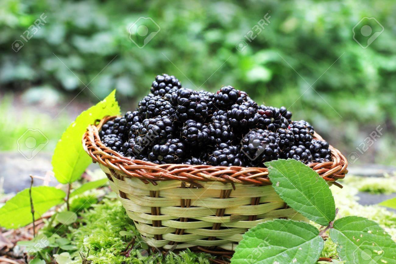 regard détaillé 2dccf ddf13 basket with delicious blackberry fruits