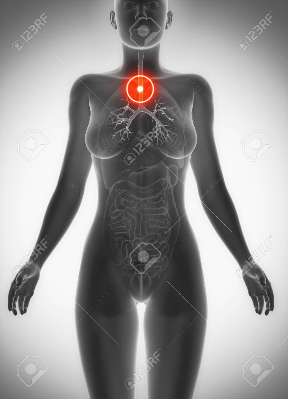 Trachea Anatomy Female Pain Concept Stock Photo Picture And Royalty