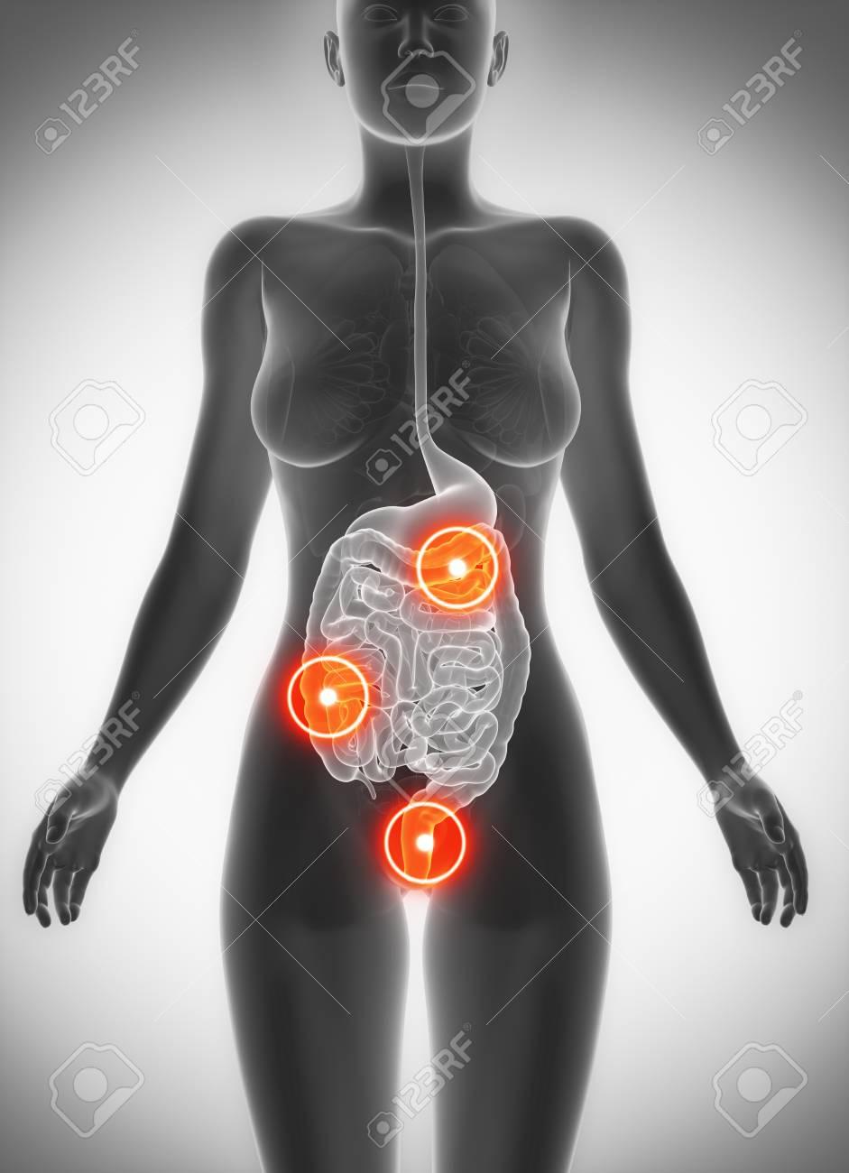 Vistoso Femenina Anatomía Del Estómago Modelo - Anatomía de Las ...