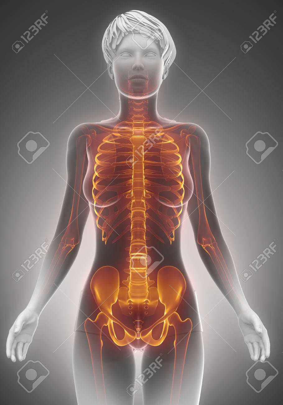 Female Torso Skeleton Scan Anatomy Stock Photo, Picture And Royalty ...