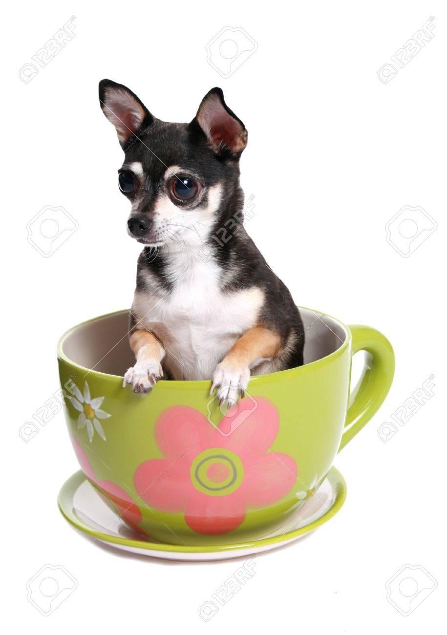 Gran Taza De Te Con Un Perro En Ella Fotos Retratos Imagenes Y