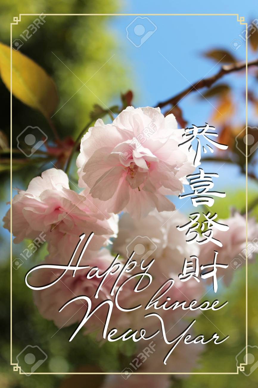 chinese new year greeting card as gong xi fa cai with the beautiful japanese cherry blossom
