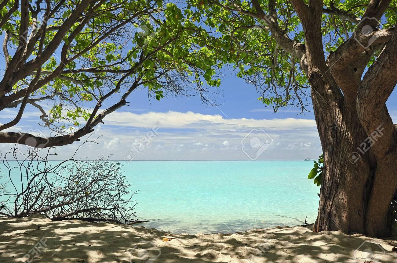 Beach in the Maldives - 134659166
