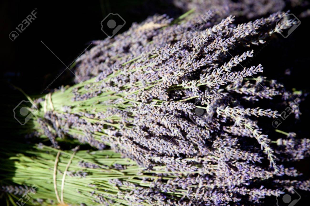Lavender in Sault, France Stock Photo - 16939623