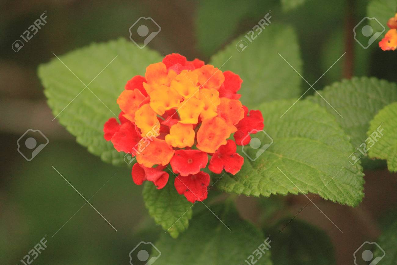 Little Red Orange Yellow Flowers Stock Photo Picture And Royalty