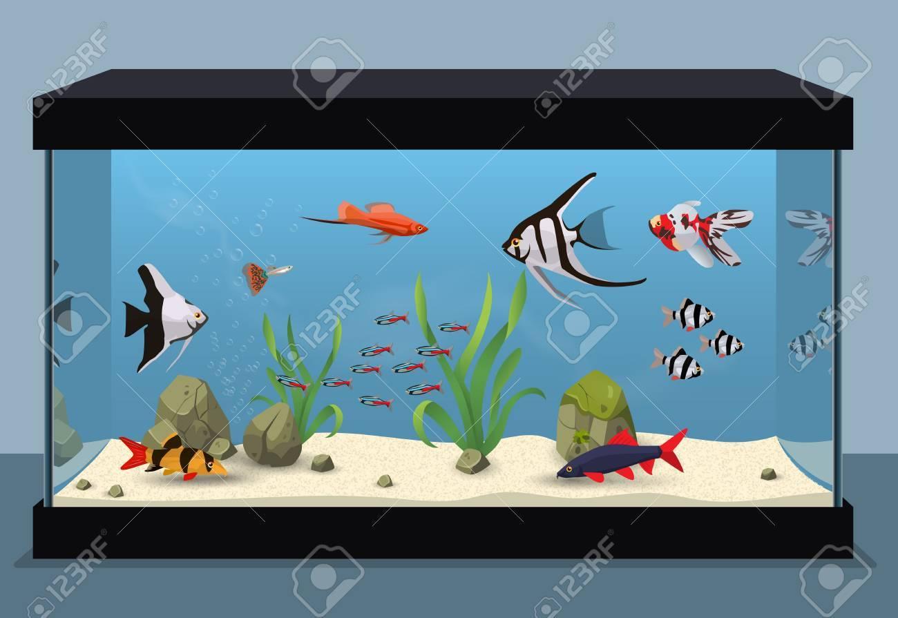 魚の異なる種類を含む淡水のアクアリウムの図のイラスト素材ベクタ