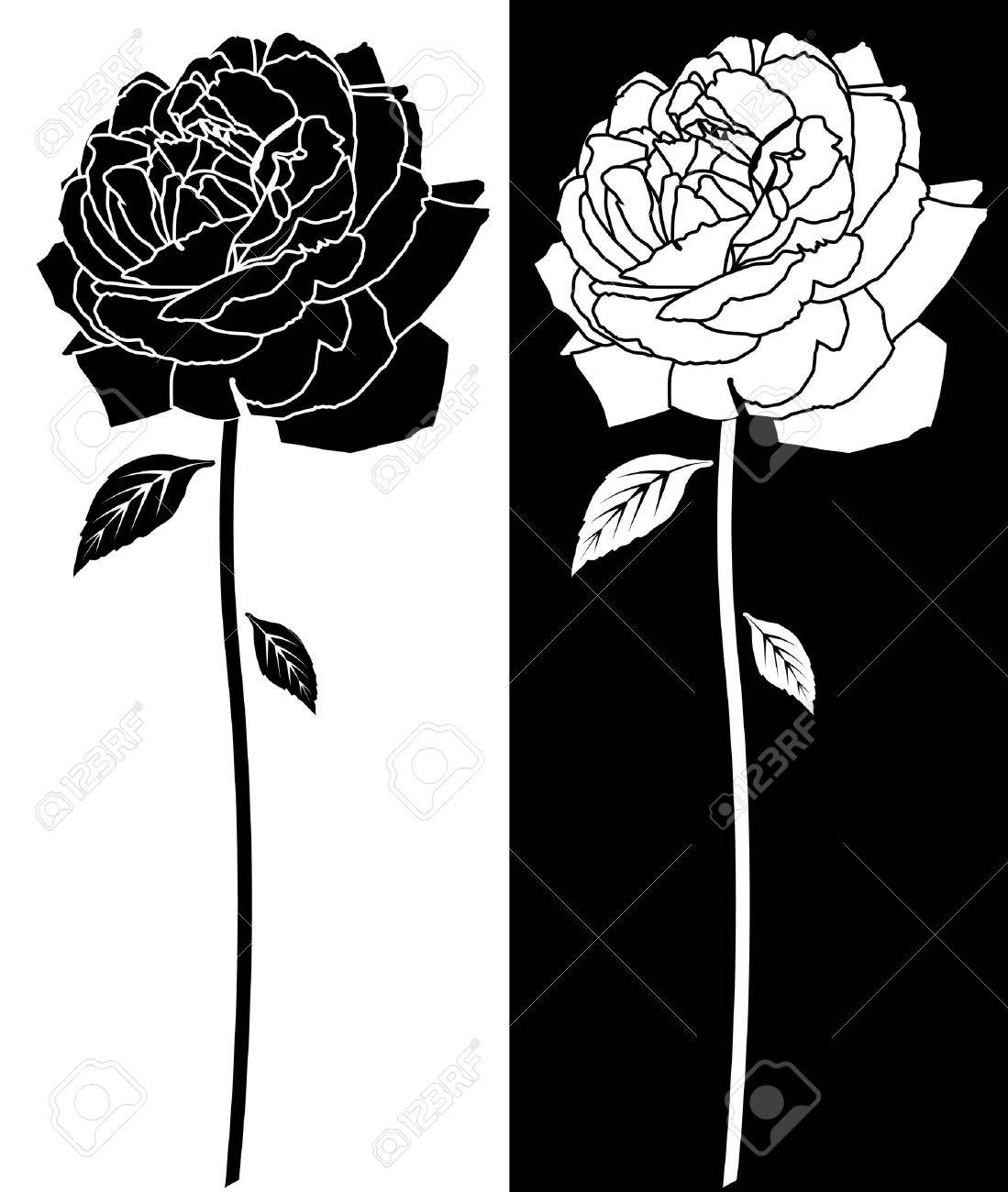 Rose Black White Drawing Royalty Free Cliparts Vectors And Stock
