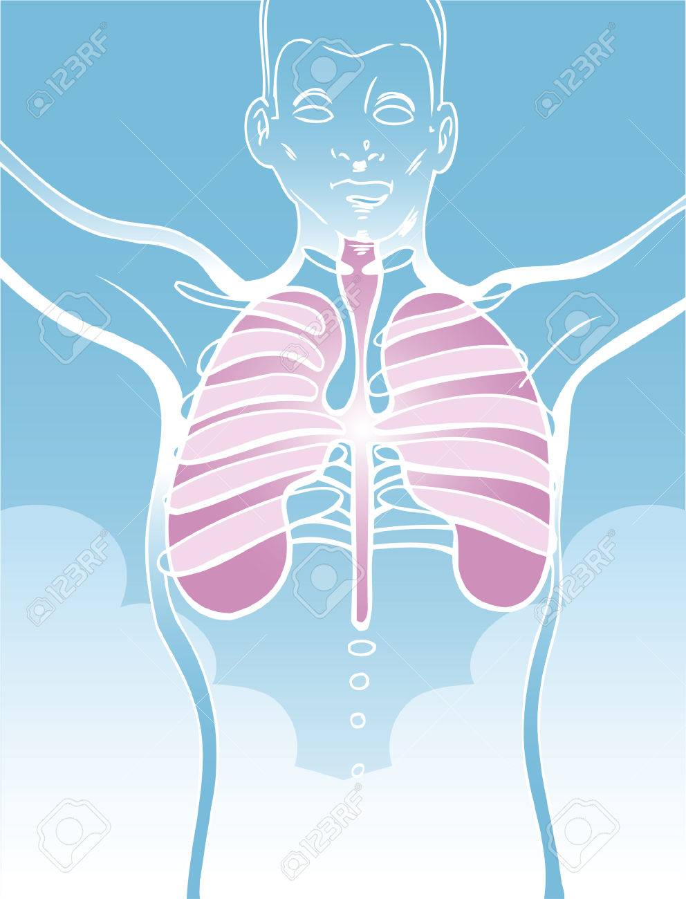 lung drawing of a man with his internal organs. Stock Vector - 5697403