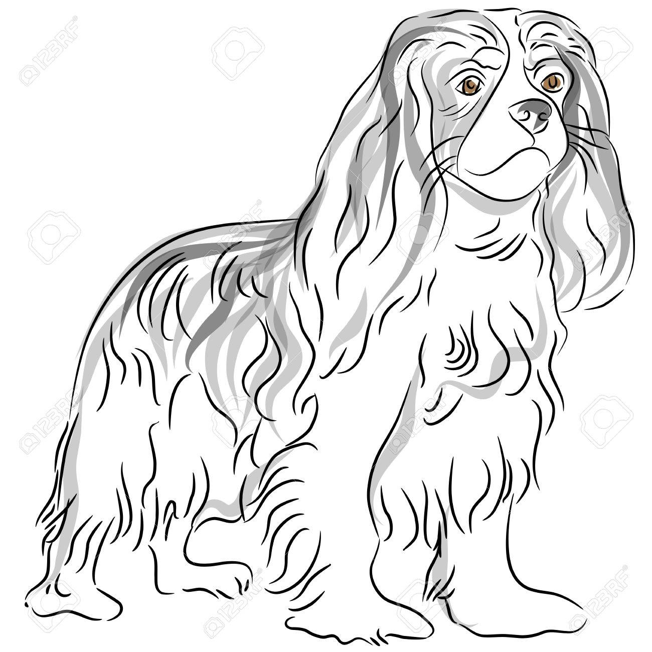 King Line Drawing an Image of a Cavalier King