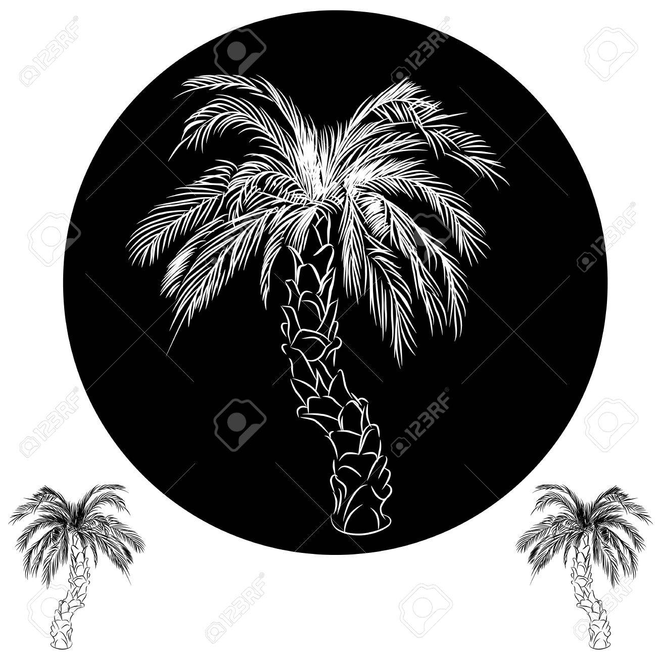 an image of a palm tree drawing royalty free cliparts vectors