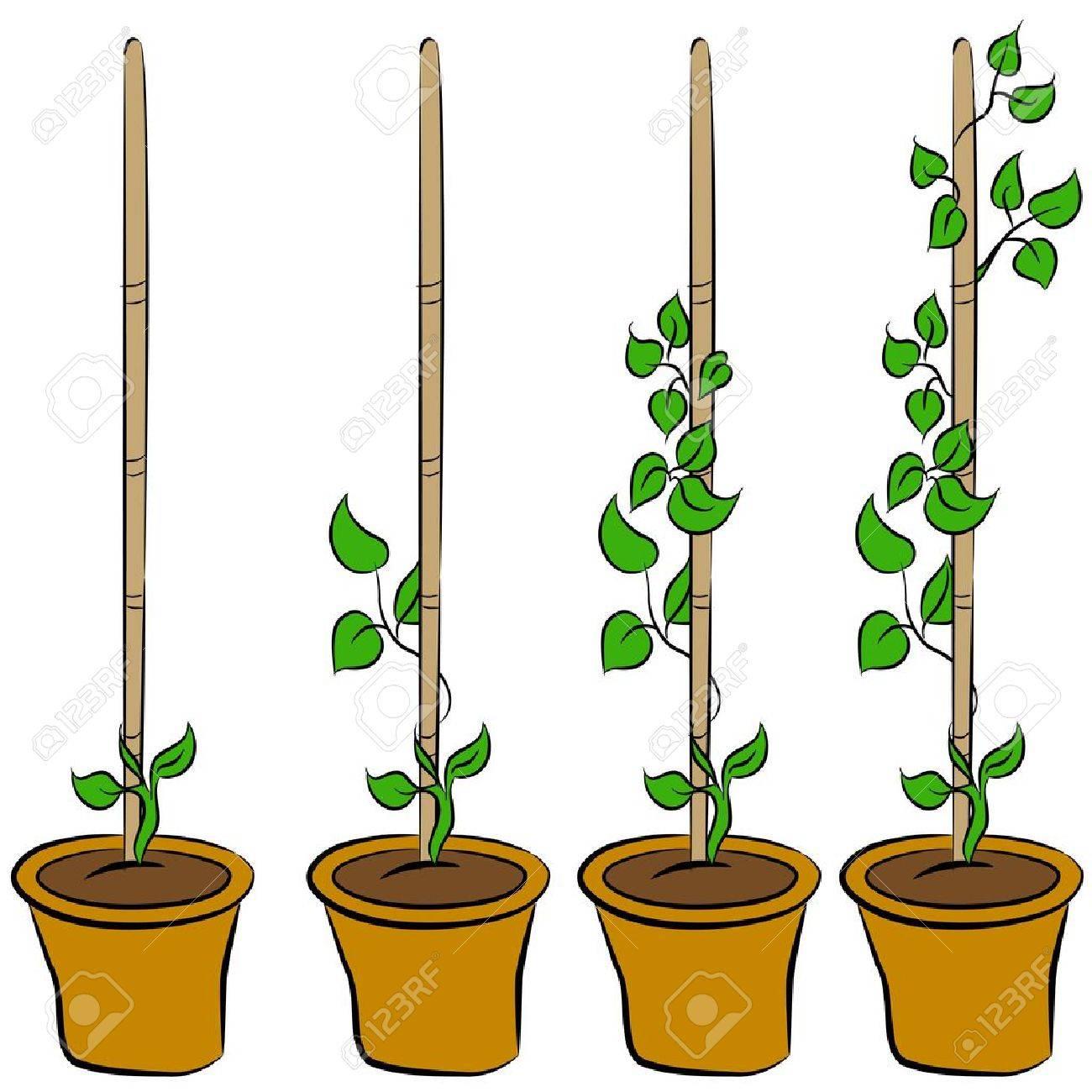 Une Image Des étapes D Une Plante En Croissance