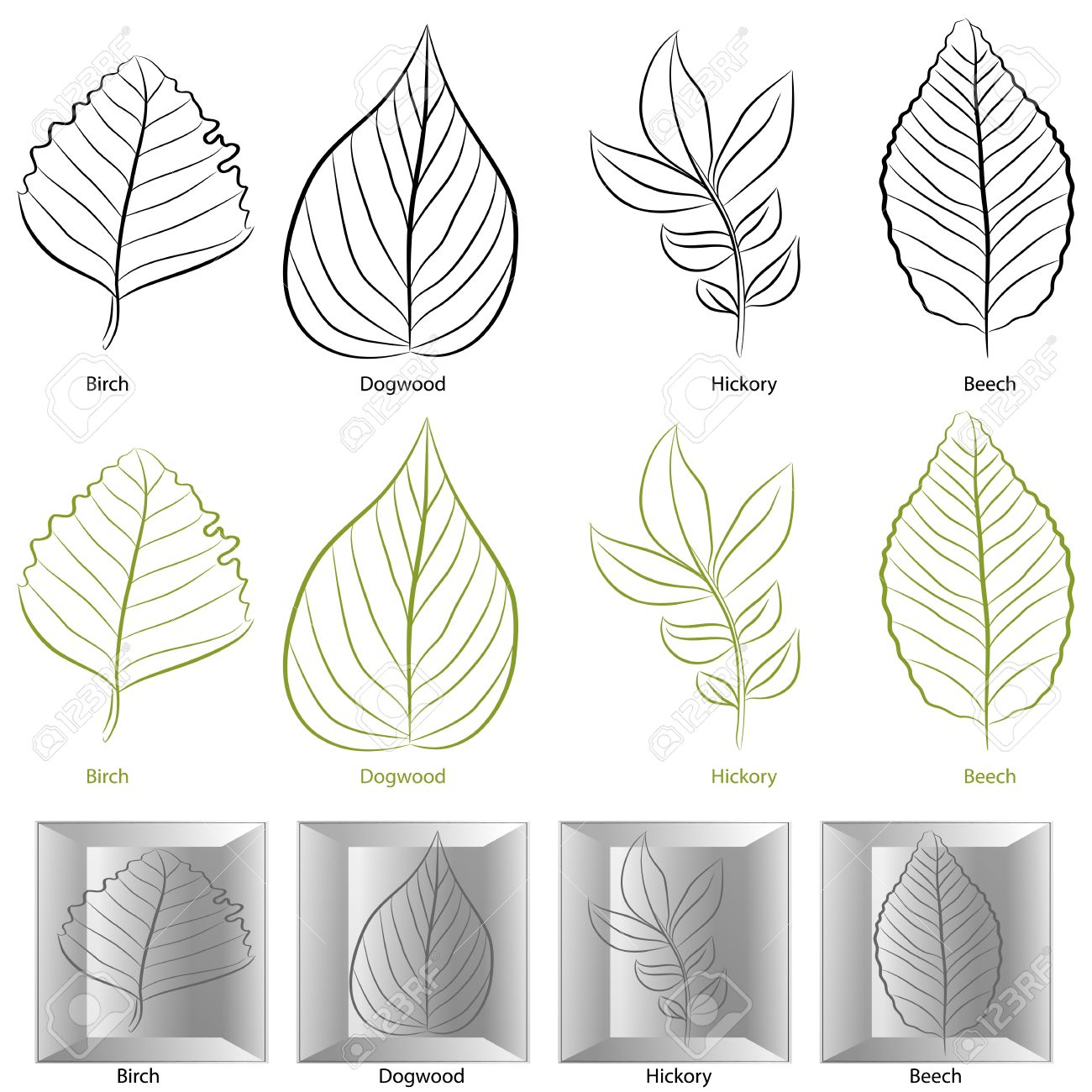 An image of a set of birch, dogwood, hickory and birch tree leaf types. Stock Vector - 12336819