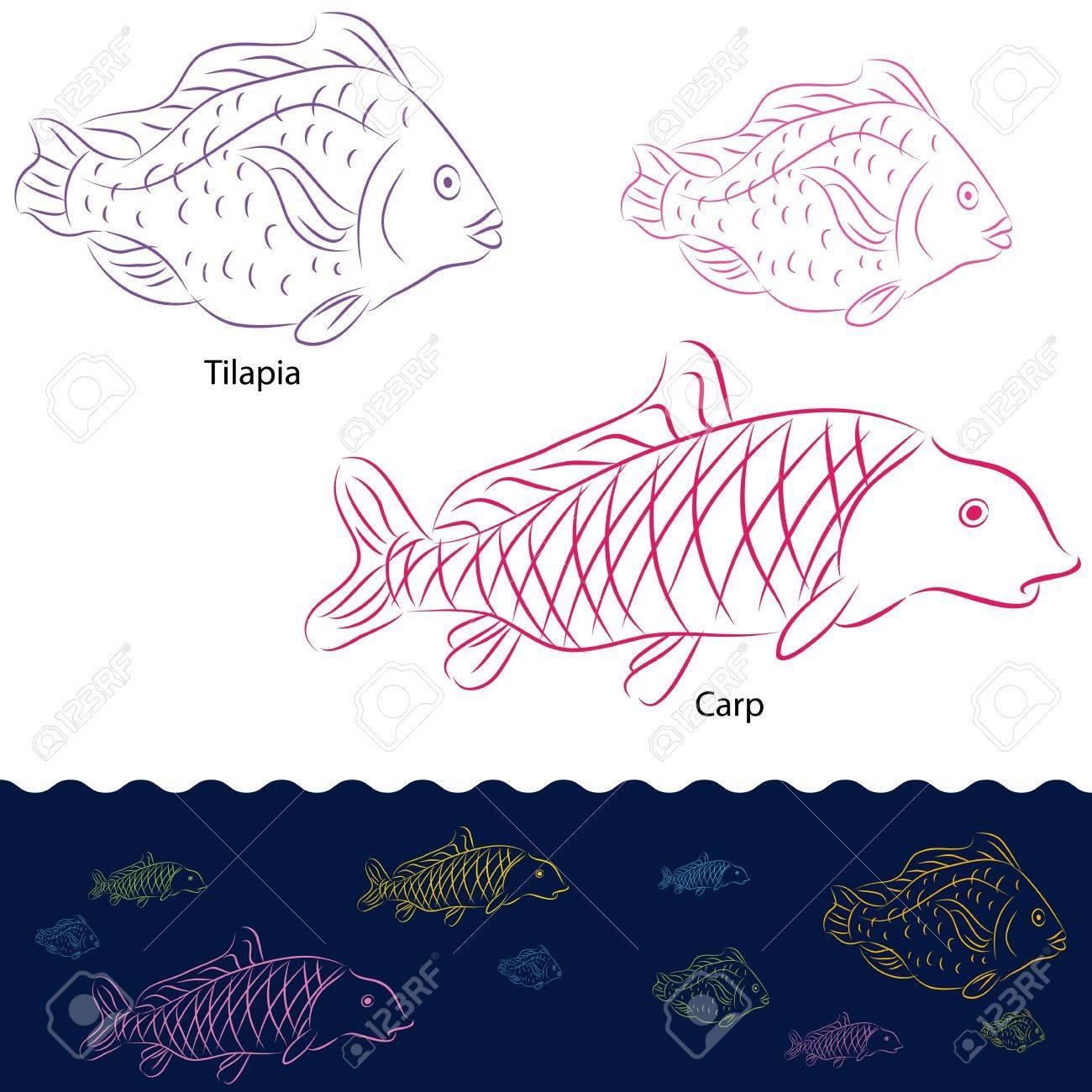 An image of a tilapia and carp fish set. Stock Vector - 12963413