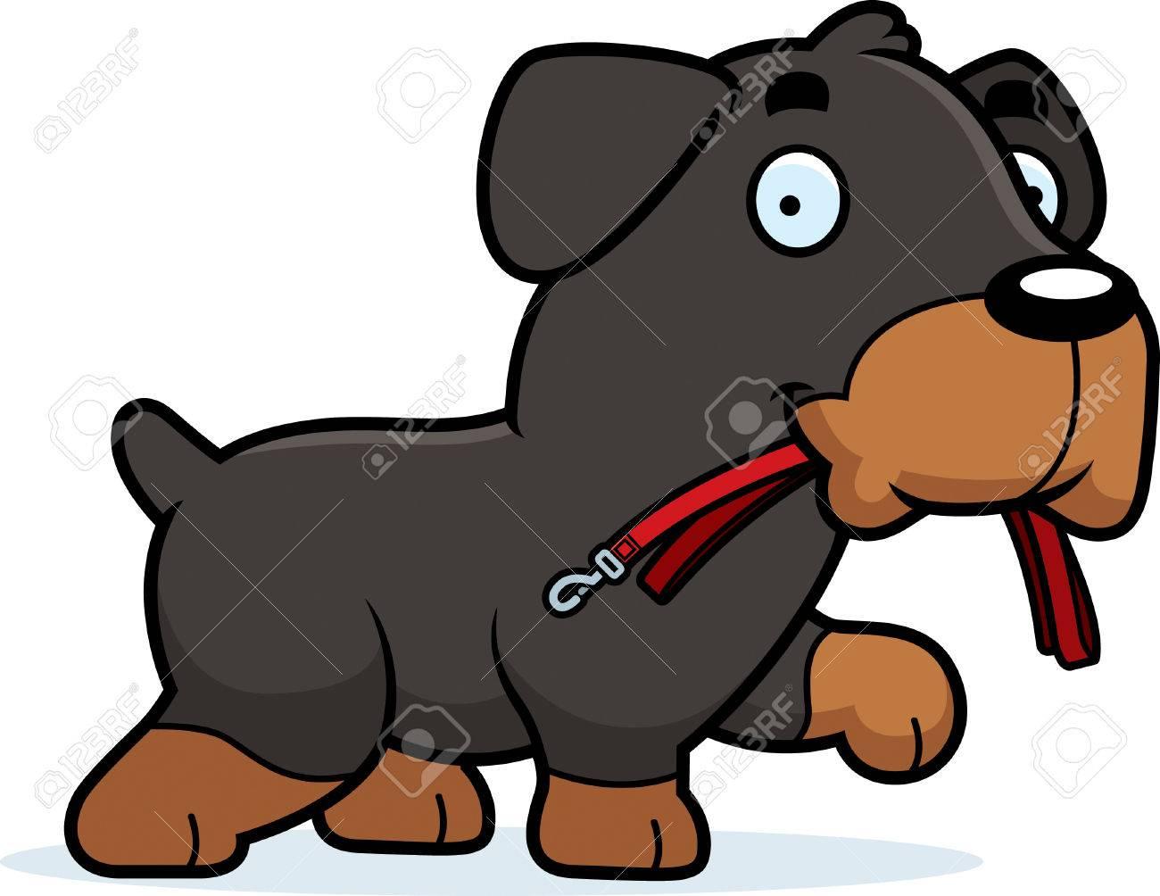 a cartoon illustration of a rottweiler walking with a leash in rh 123rf com