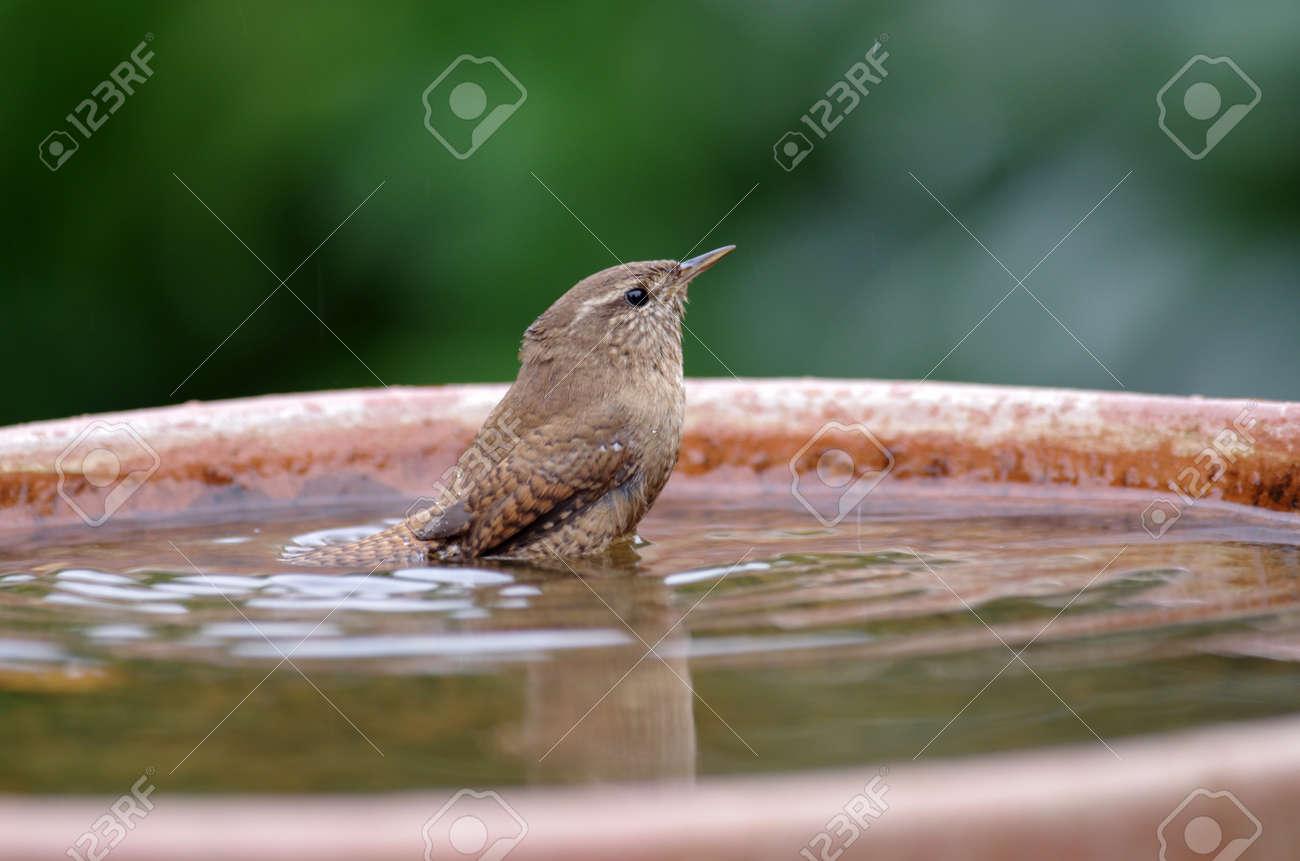 pretty little bird takes a bath in the bird bath - 158190171