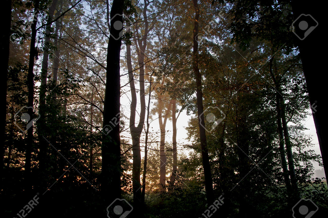 Atmospheric mood in the forest, the silhouettes of the trees appear in a special light - 161668124