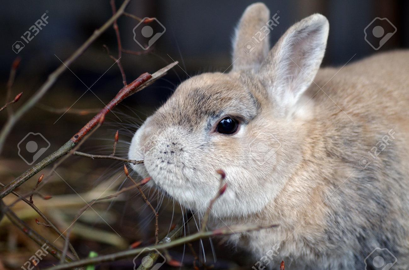 a rabbit nibbles on fresh branches, closeup - 161668125