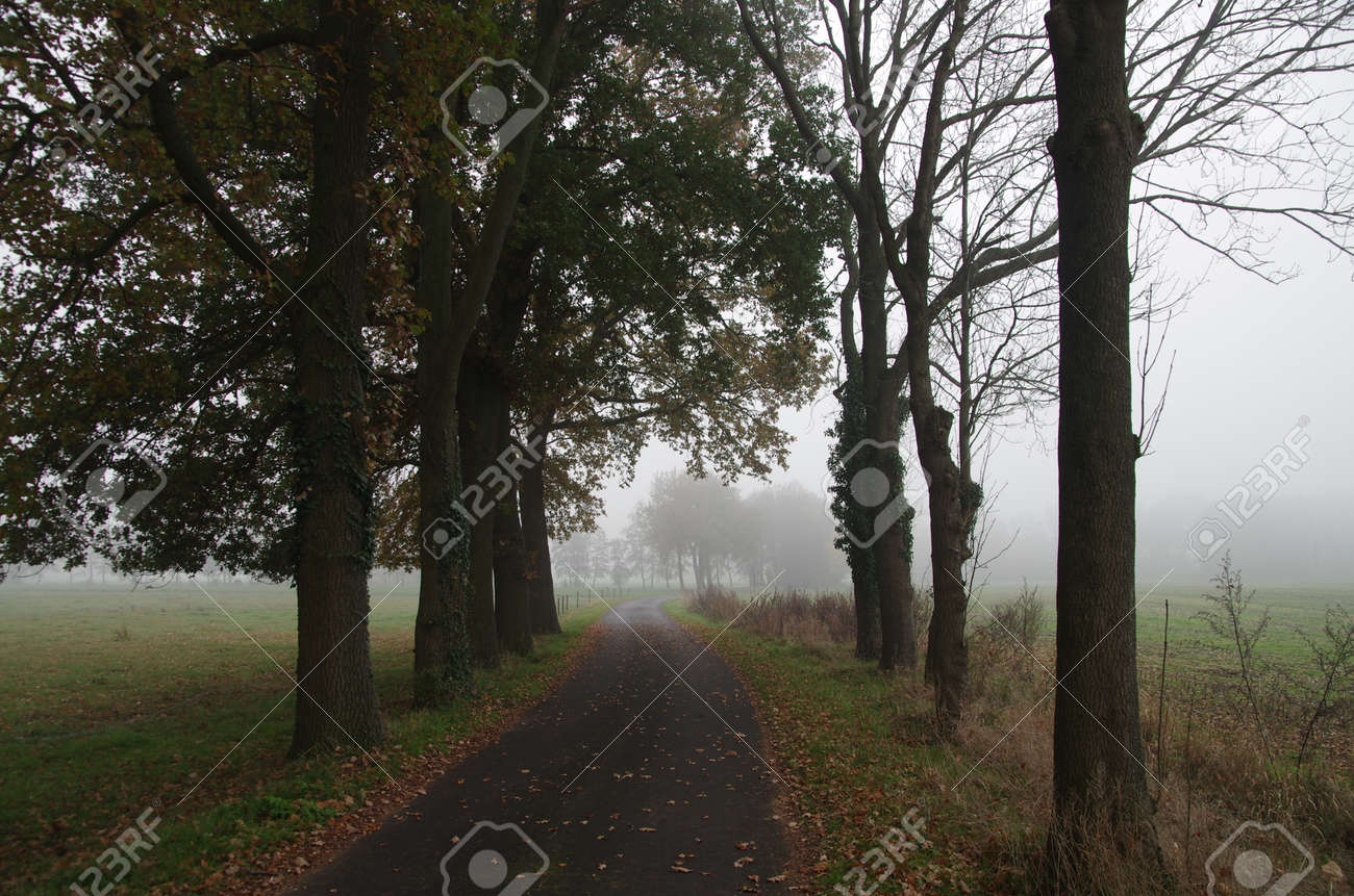 A country road in autumn with fog and autumn leaves on the asphalt - 162025693