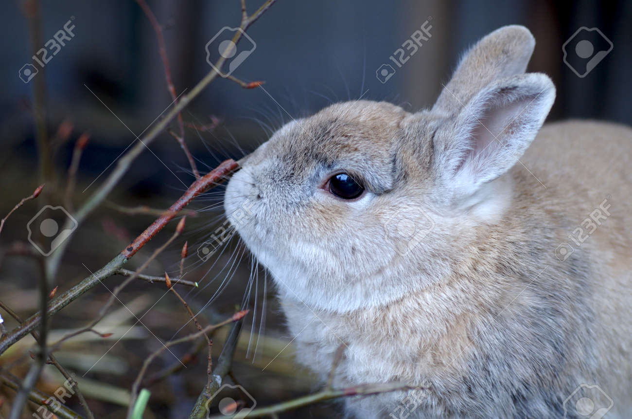 portrait of a cute rabbit nibbling on branches - 163833805