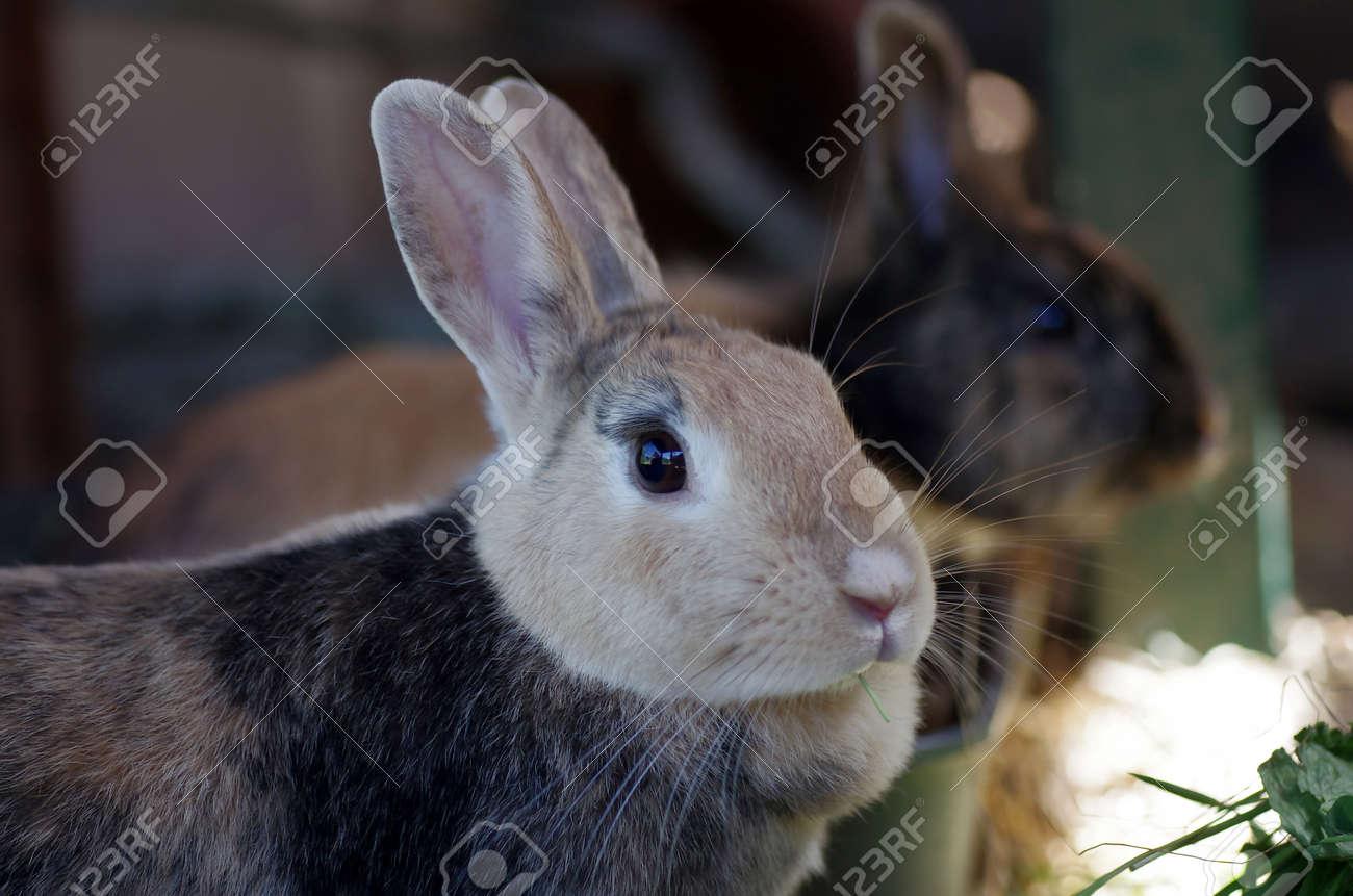 portrait shot of a brown rabbit - 166086492