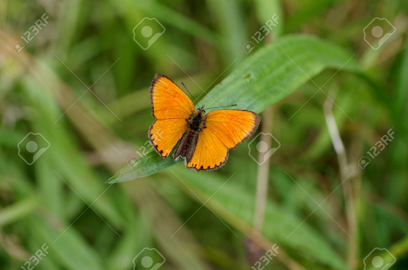 A butterfly is sitting on green leaves - 166103456