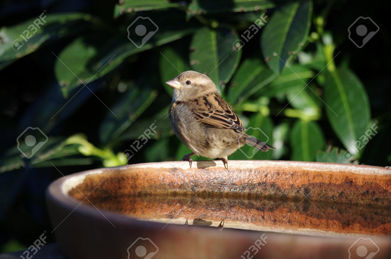 the little sparrow sits on the bird bath in the sunlight - 167326930